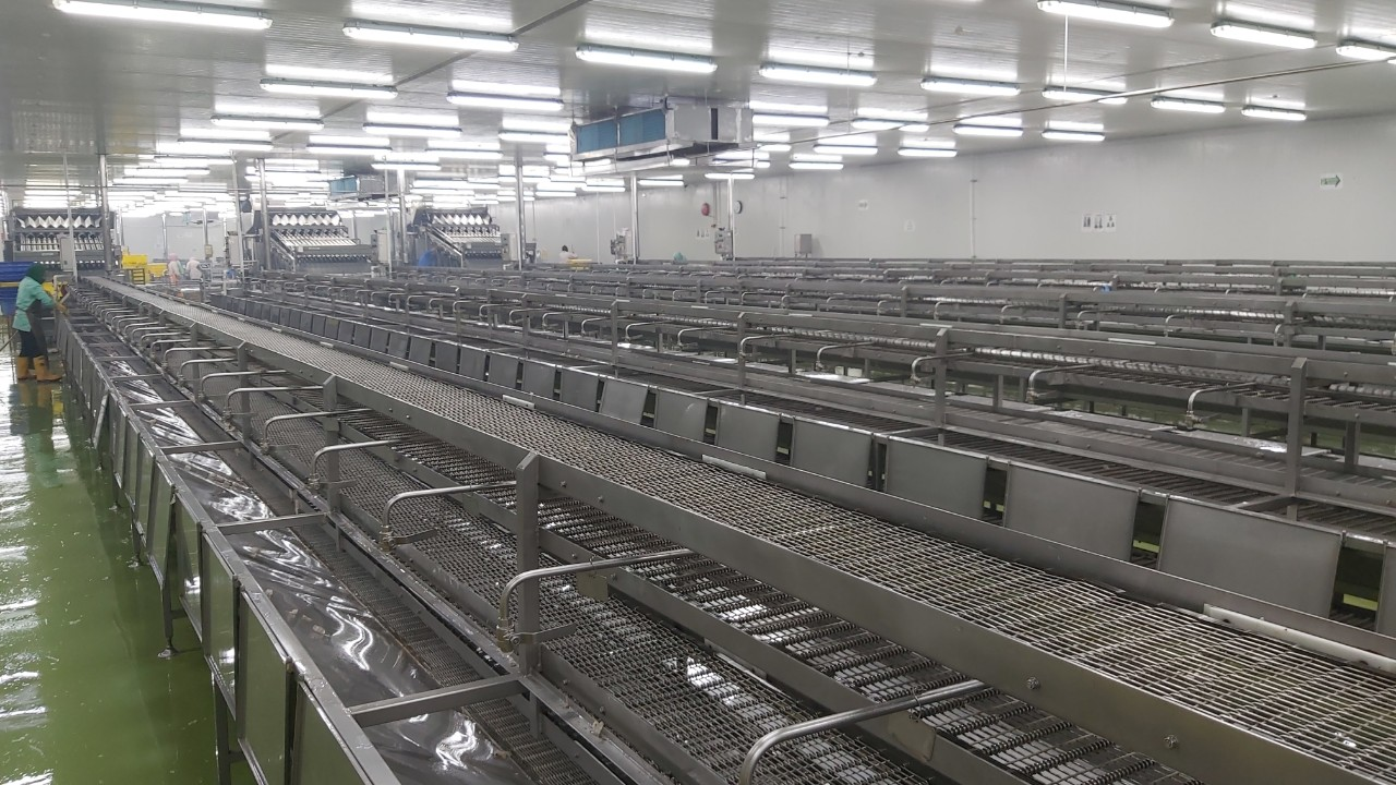PEELING CONVEYOR